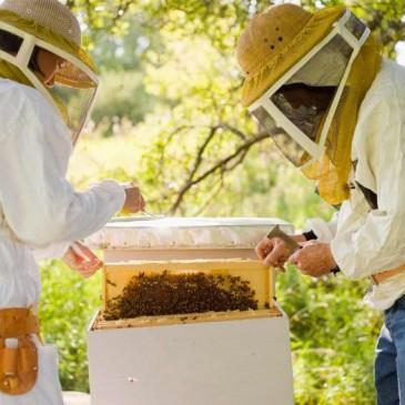 Axudas á apicultura